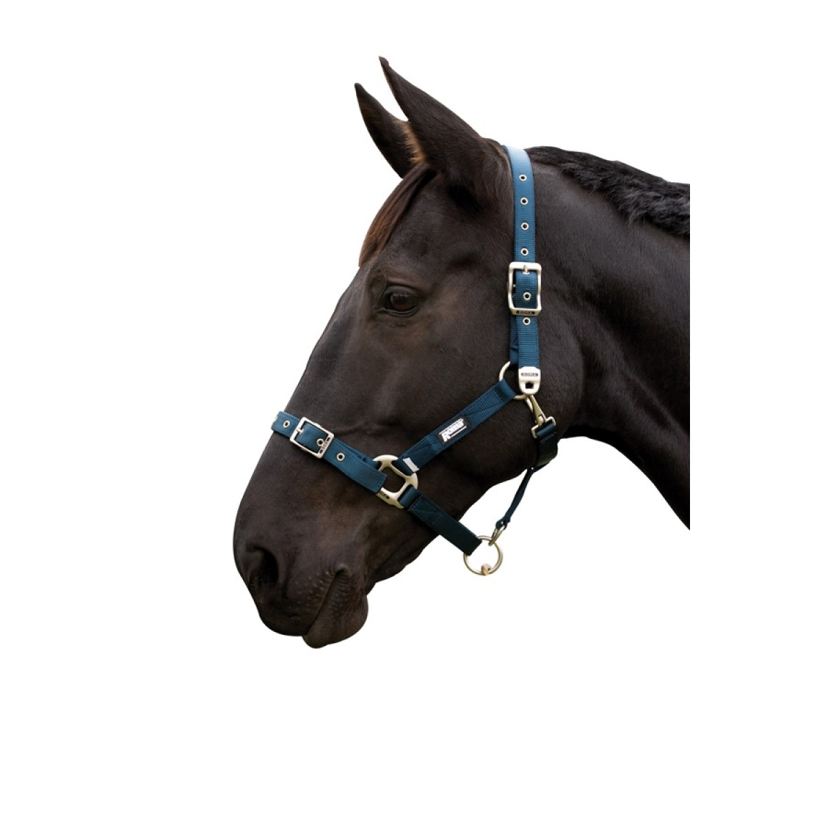 Roma Continental Headstall