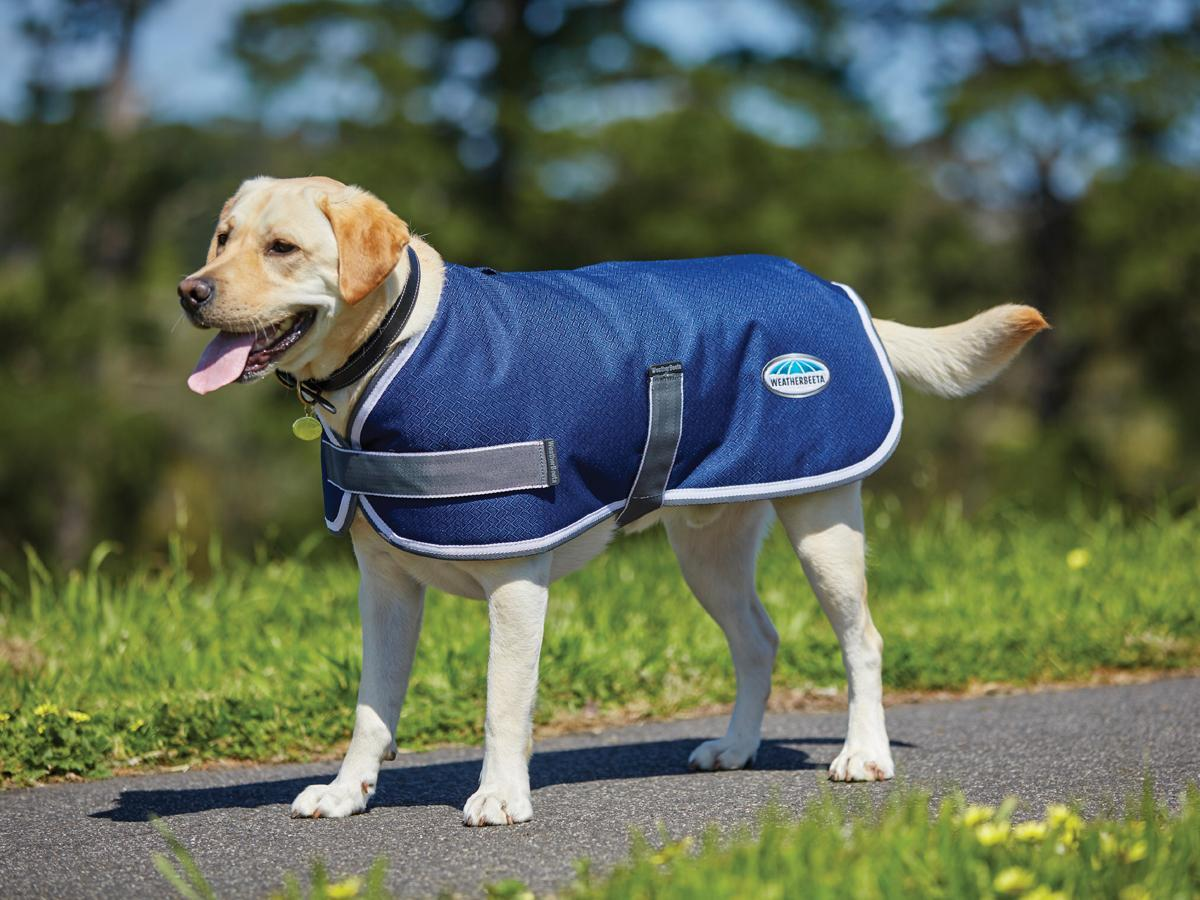 windbreaker-dog-coat-navy-grey-white