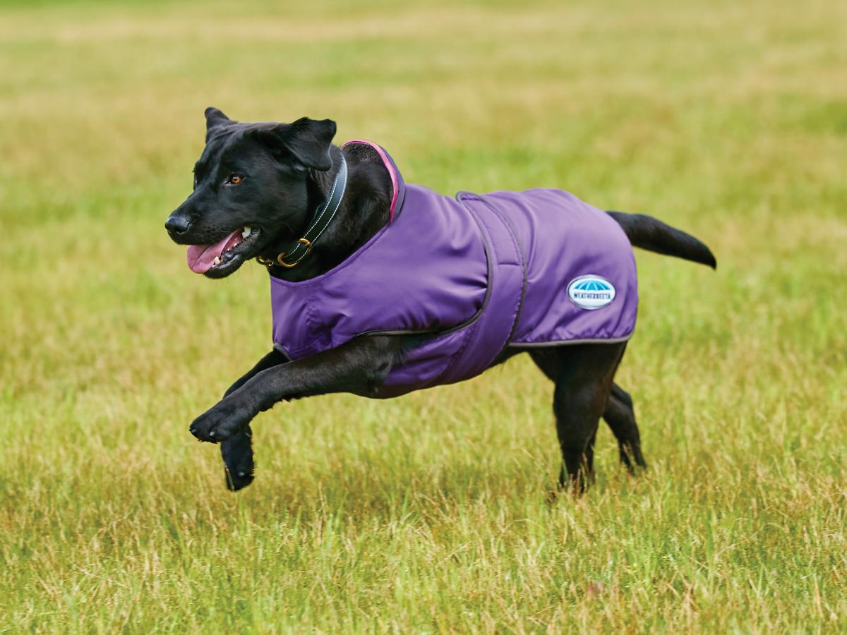 windbreaker-deluxe-420d-dog-coat-purple-black