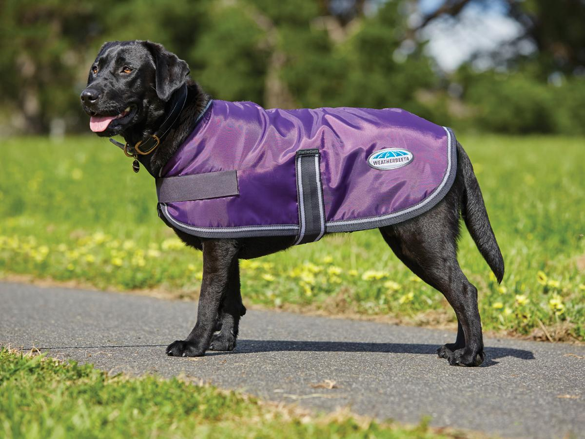 windreaker-420-dog-coat-purple-black-802169-stand
