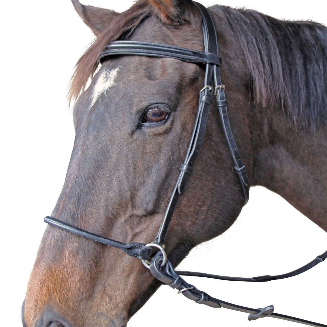 Thompson Bitless Bridle
