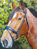 Kincade Comfort Anatomical Flash Bridle